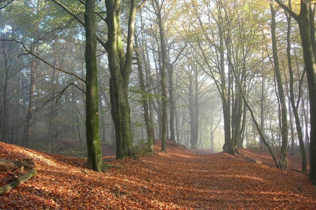 Forest near Doetinchem (Pieterpad, the Netherlands)