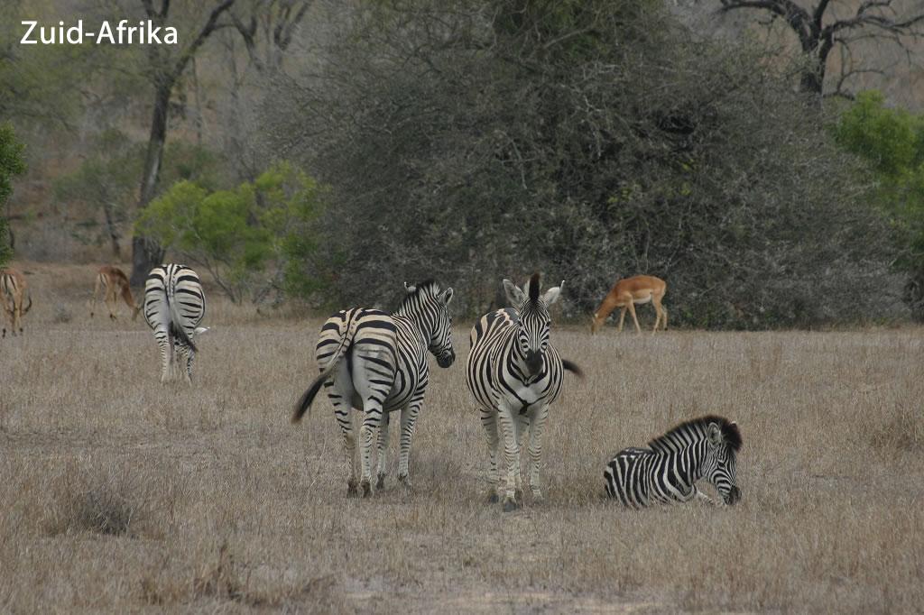 Reizen-Zuid-Afrika
