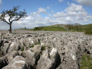 Limestone bij Conistone