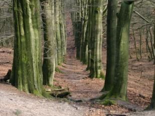 Koningsweg op de Veluwe